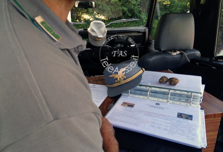 Raccolta tartufo bianco fuori stagione: 4.000 euro di multa ad un laziale
