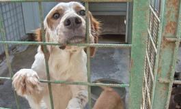 Rocchetta a Volturno, 1000 euro alle associazioni che adottano un cane