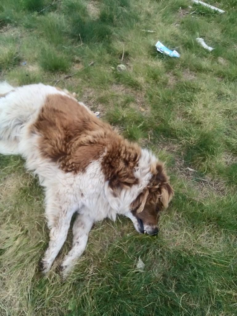 Cani avvelenati sulla 'Piana Santa Liberata', la disperazione di un pensionato