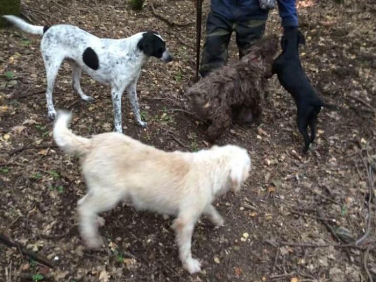 Castellone di Bojano, furto di cani: proprietario disposto a perdonare, promette denaro