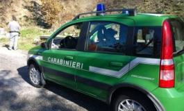 Carabinieri forestali, controlli sull'uso di shoppers irregolari