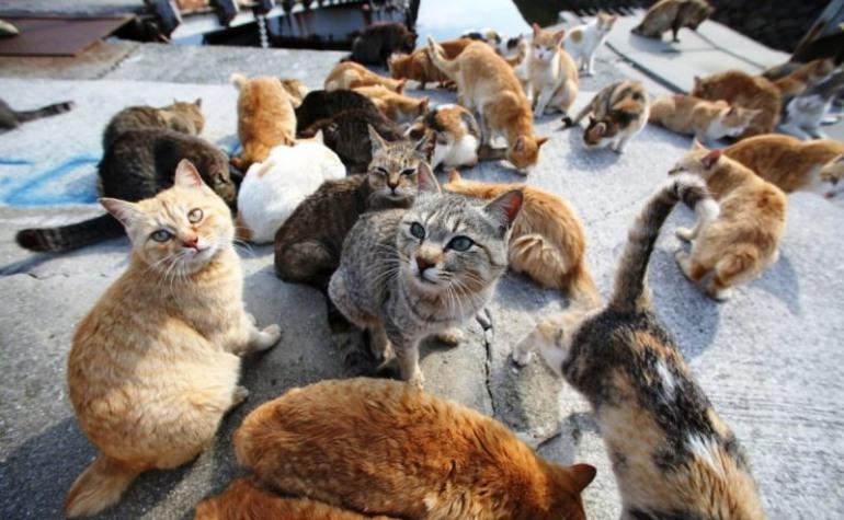 Agnone, sospetta moria di gatti: bocconi avvelenati?