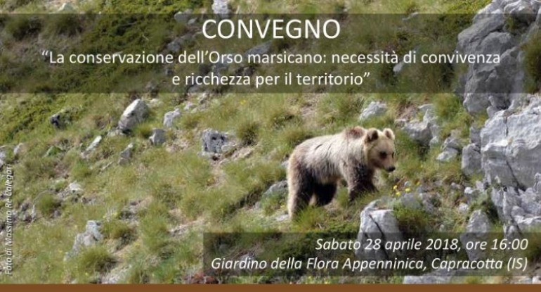 Capracotta, focus sull'orso bruno marsicano al giardino della flora appenninica