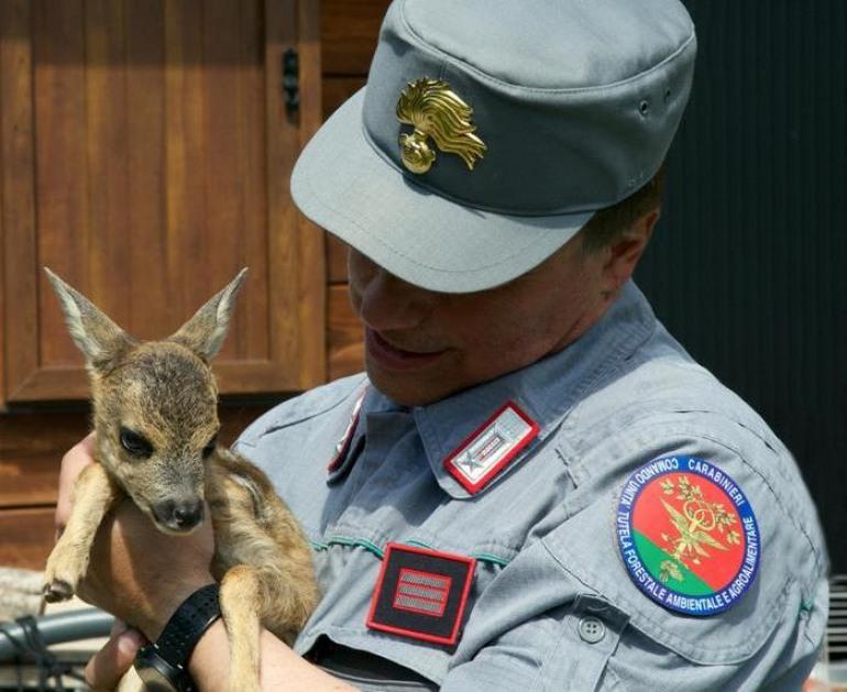 Salvato dai Carabinieri Forestali un cucciolo di capriolo