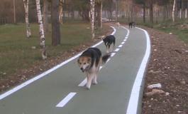 """Castel di Sangro festeggia gli amici a 4 zampe: domenica è """"dog walking"""""""