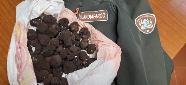 Tartufo raccolto, sequestrati dai Guardiaparco 1 kg di tartufi uncinato