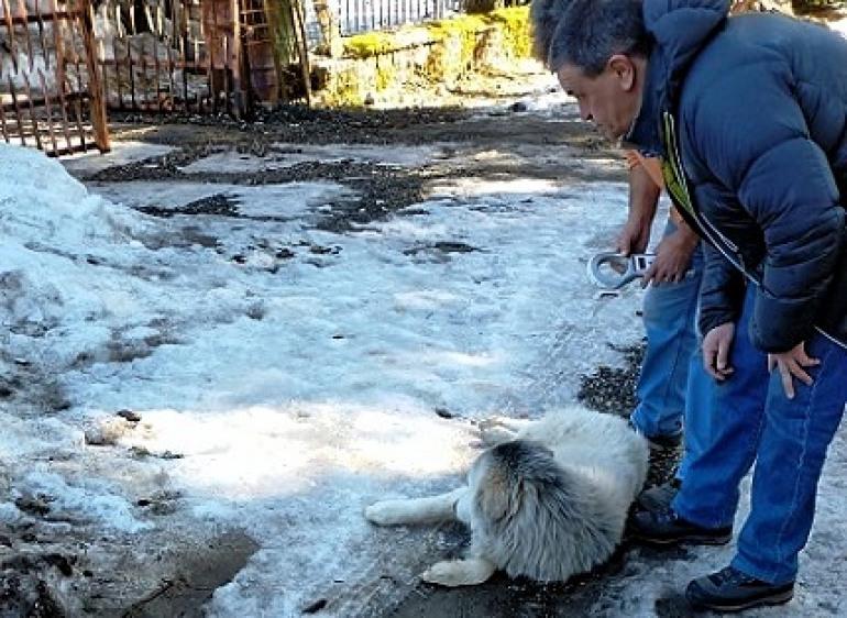 Pescasseroli: catturati 10 cani randagi, sanzionati i proprietari