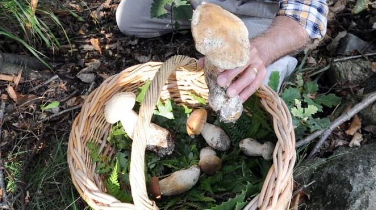 Isernia, corso gratuito per la raccolta dei funghi
