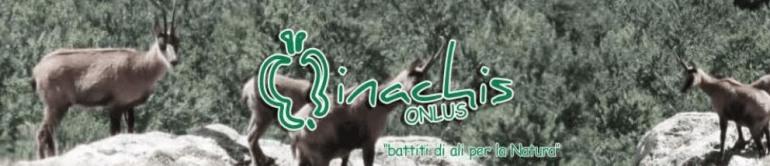 Parco nazionale d'Abruzzo, estate con 'Inachis' sul fronte della natura