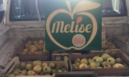 Le Mele degli Orsi, la Melise consegna 12 cassette di mele biologiche