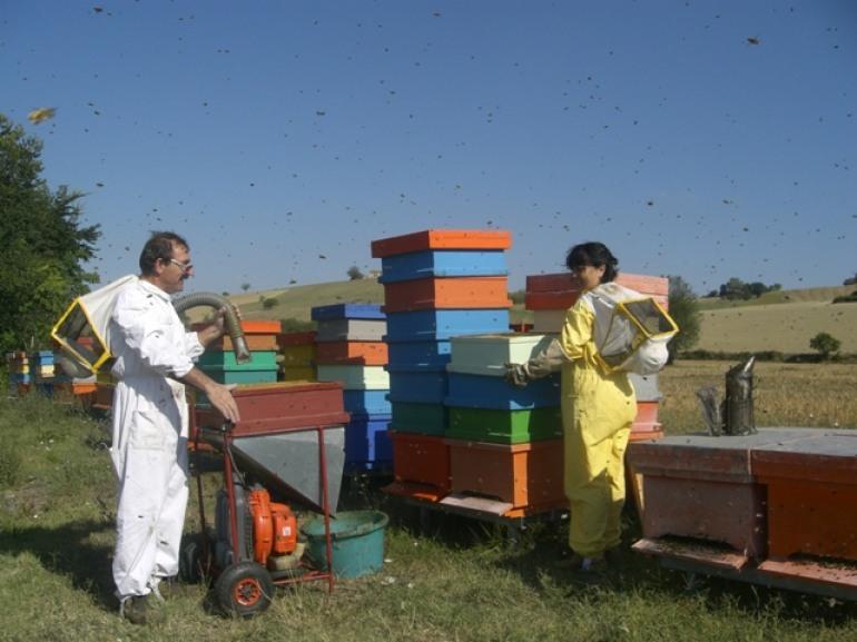 Il miele abruzzese si afferma a Montalcino con la pluripremiata apicoltura Finocchio