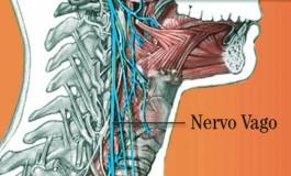 Al Neuromed un modello di ultima generazione per la stimolazione del nervo vago nei pazienti con epilessia farmacoresistente