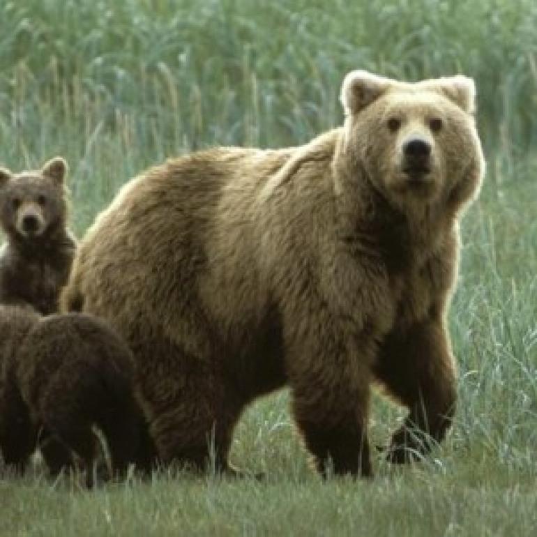 La storia si ripete….ancora un orso ucciso