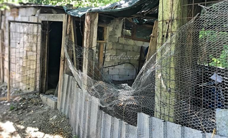 L'Orsa Peppina si intrufola nel pollaio, 15 vittime tra i pennuti