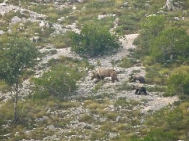 Pnalm, il 2015 ha portato alla luce sei orsetti