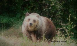 Nuovo stop alla caccia nel versante laziale della zona di protezione esterna del Pnalm