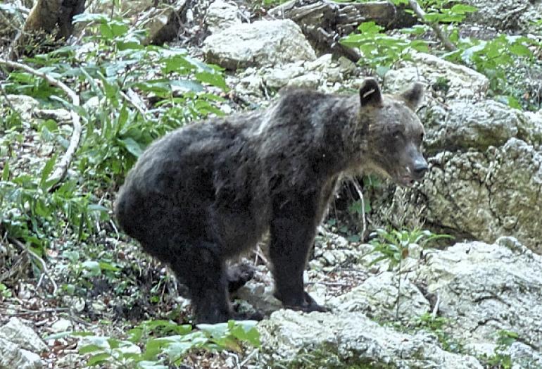 Bracconiere fermato dai Forestali Castel di Sangro, rischia fino a sei anni di arresto