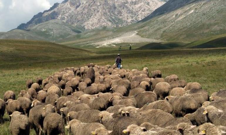 Pescocostanzo, a spasso con i pastori per rievocare la transumanza