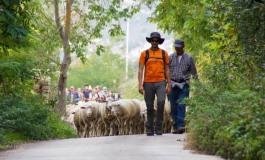 A piedi per il tratturo Castel di Sangro - Lucera. Si parte il 30 agosto