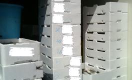 Castel di Sangro, i Forestali sequestrano 60 kg di pesce privo di etichettature