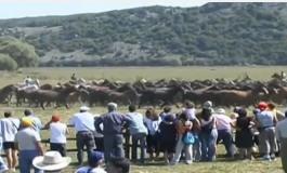 Il cavallo pentro di Montenero Valcocchiara, Re indiscusso della natura molisana