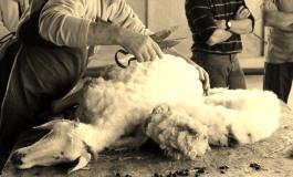"""Tosatura, preparazione de """"Lumanz"""" e pranzo insieme al pastore Daniele a Roccamandolfi"""