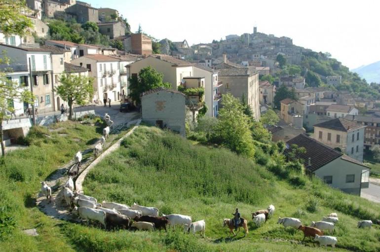 4 giorni di transumanza dal Molise alla Puglia con i Colantuono di Frosolone