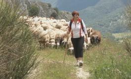 Roccamandolfi, turisti di ogni età sul tratturello con la 'pecorella nera'