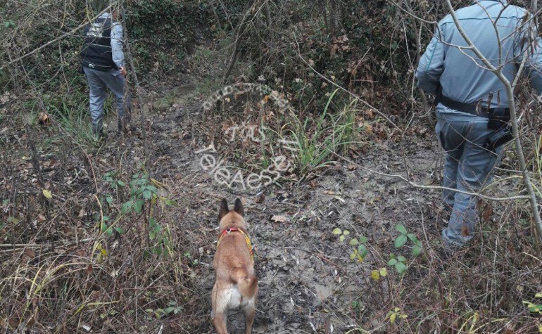Ateleta, operazione antiveleni dei forestali