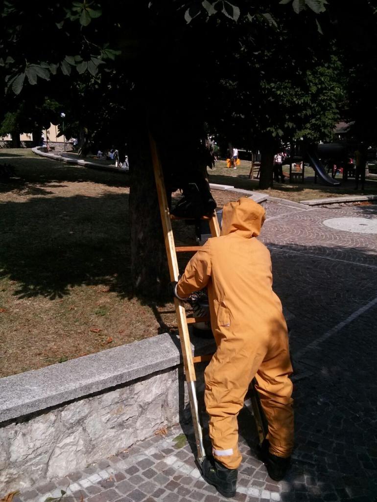Emergenza vespe, intervengono i Vigili del Fuoco