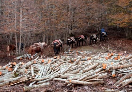 Opi, a Val Fondillo la festa dei lavoratori del bosco