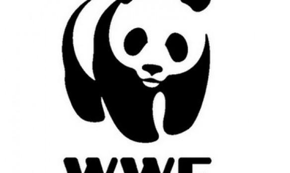 """Wwf, il panda incontra i docenti a Guardiaregia per """"Urban nature diamo spazio alla natura in città"""""""